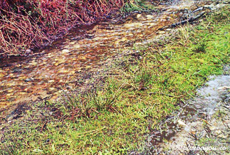 Der Jakobsweg ist streckenweise komplett überflutet.