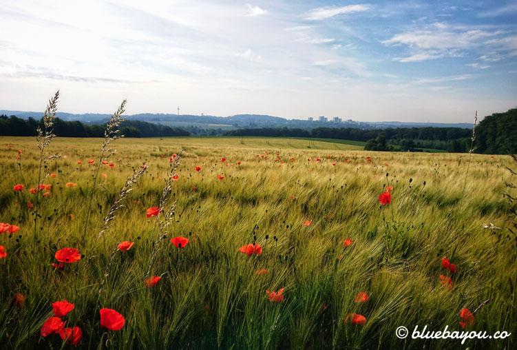 Fotoparade Pflanzen: Dieses Mohnfeld passierte ich auf meiner 101-Kilometer-Wanderung.