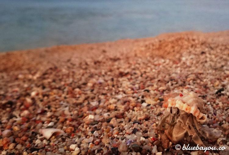 Fotoparade Rätsel: Welches Tier wandert hier einen Strand in Ägypten entlang?