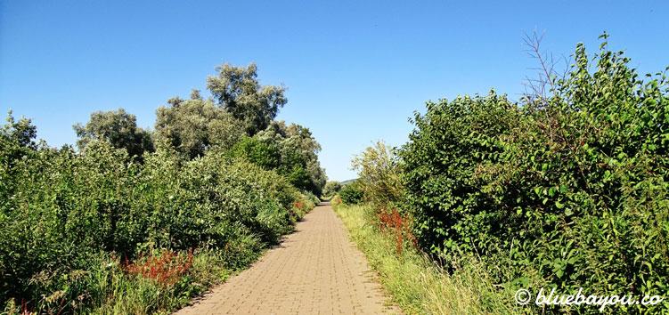 Ein Teil der Strecke von Eltville am Rhein nach Rüdesheim.