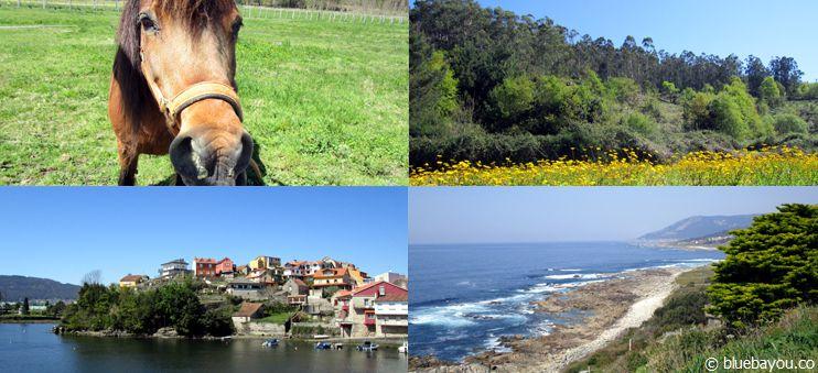 Tiere, Wiesen, Dörfer und Küste: Der nicht-traditionelle Jakobsweg von Santiago nach Porto.