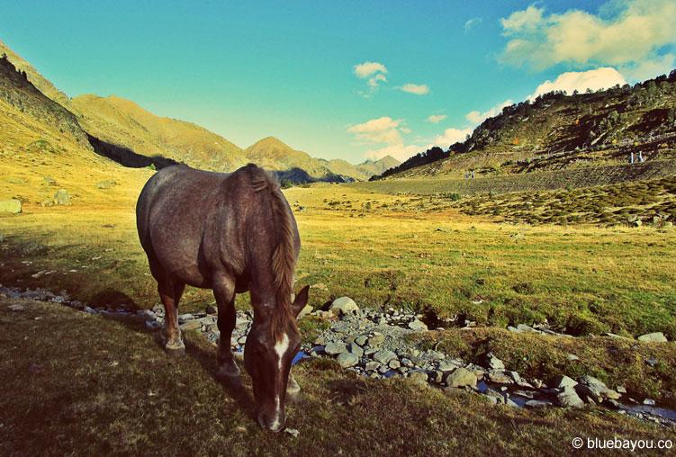 Freilebendes Pferd neben einem kleinen Bach in Andorra.