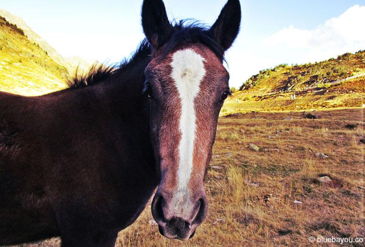 Die freilebenden Pferde in Andorra haben keine Angst vor Menschen und sind perfekte Fotomotive.