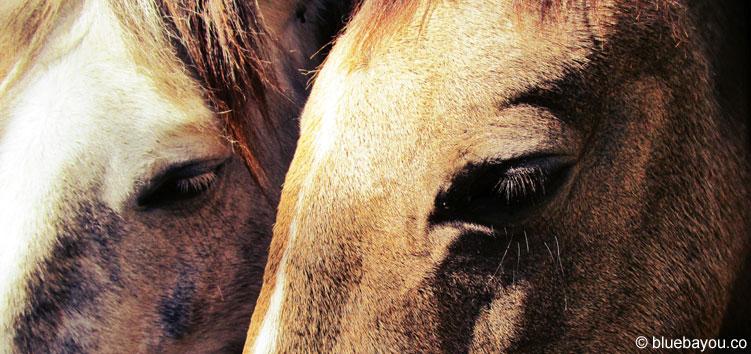 Zwei Pferde in Andorra - davon gibt es dort sehr viele.