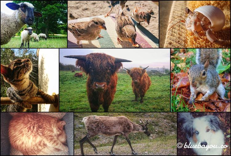 Fotoparade 2020: Collage zum Thema Tiere