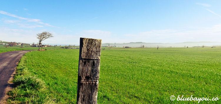 Ein Feldweg entlang einer Wiese auf dem Jakobsweg.