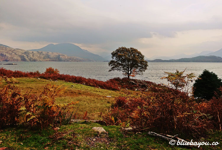 Fotoparade Landschaft: Ein Baum am schottischen See vor den Bergen.