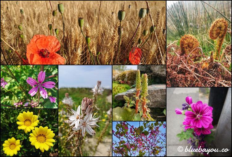 Fotoparade Collage Pflanzenwelt: Wunderschöne Nahaufnahmen entstanden auch 2019.