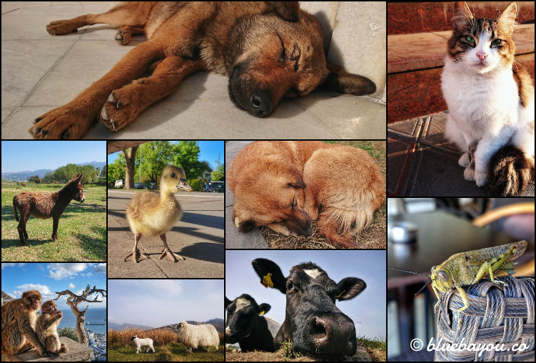 Fotoparade Collage Tiere: So schöne Anblicke boten sich mir in der Tierwelt in Tiflis, Baku, Hamburg, Gibraltar, Irland und auf Kos.
