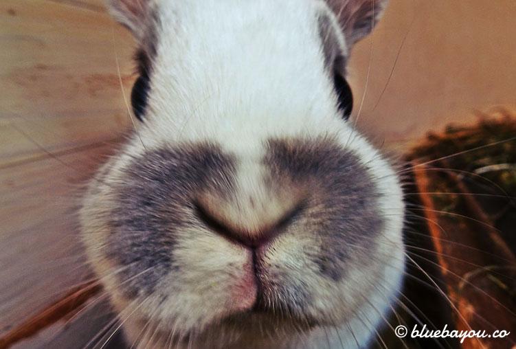 Kategorie Tiere: Der kleine Hase war sehr neugierig und an der Kamera interessiert.