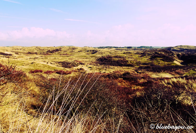 Kategorie Fern: Der holländische Nationalpark Zuid Kennemerland bei Zandvoort.