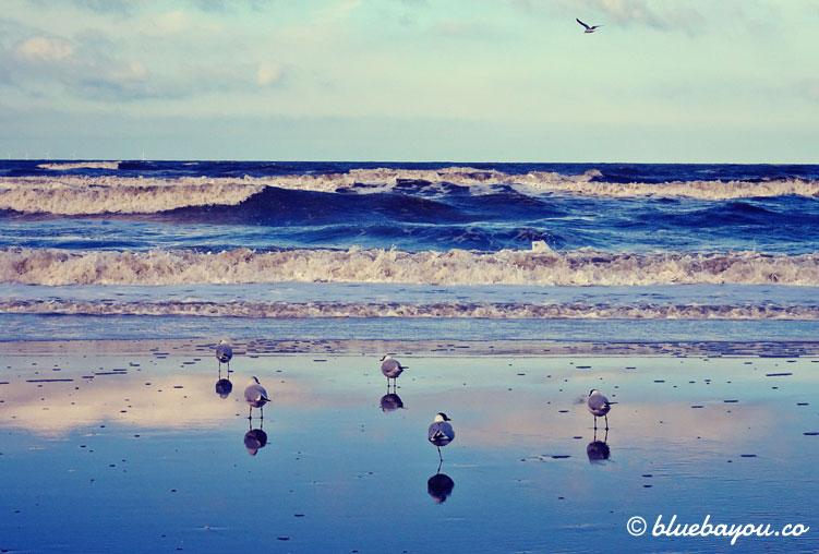 Kategorien Entspannt & Schönstes Foto: Vögel am Meer in den Niederlanden beim Chillen.
