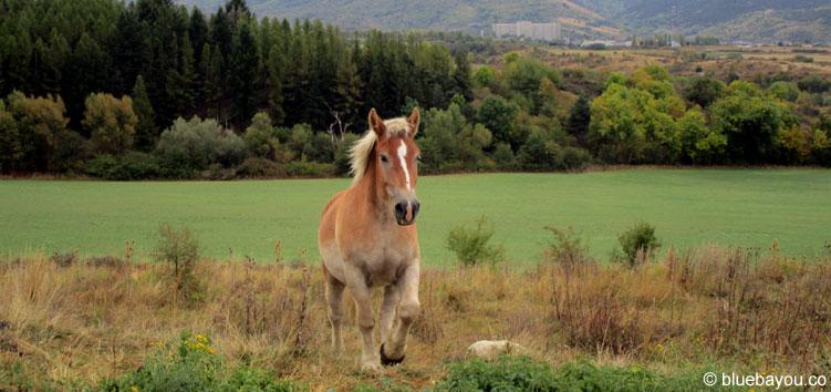 Ein braunes Pferd in der Nähe von Bourg-Madame in Frankreich.