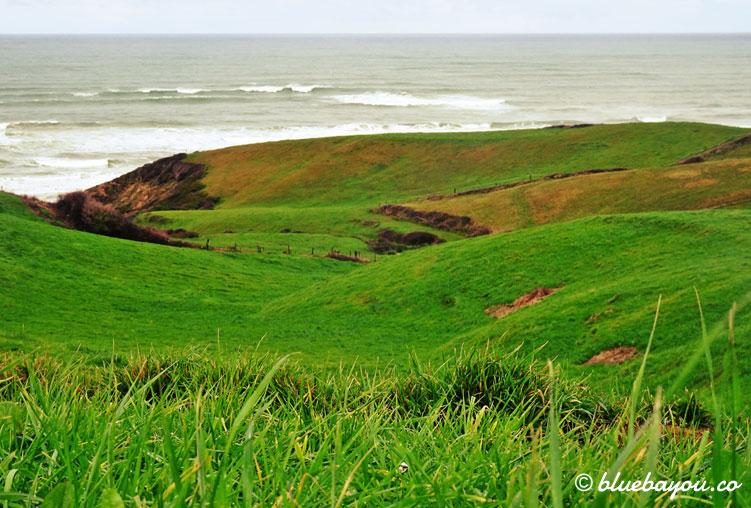Grüne Hügel entlang des Camino del Norte im Februar.