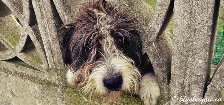 Hund auf dem Jakobsweg.
