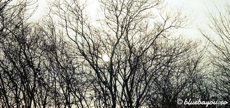Sonne hinter den kahlen Bäumen - Ausblick beim Wachwerden nach einer erholsamen Nacht.