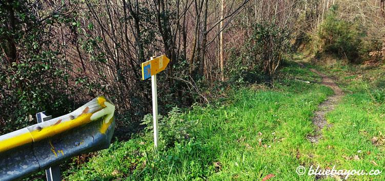 Gelbe Jakobsweg-Pfeile in den Wald hinein.