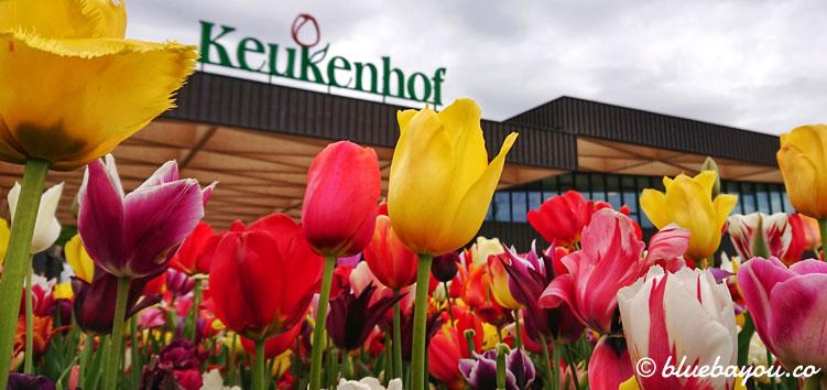 Eingang des Keukenhofs mit Tulpen.