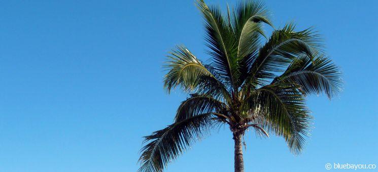 Kleiner Traumstrand in Key West mit gratis Parkplätzen