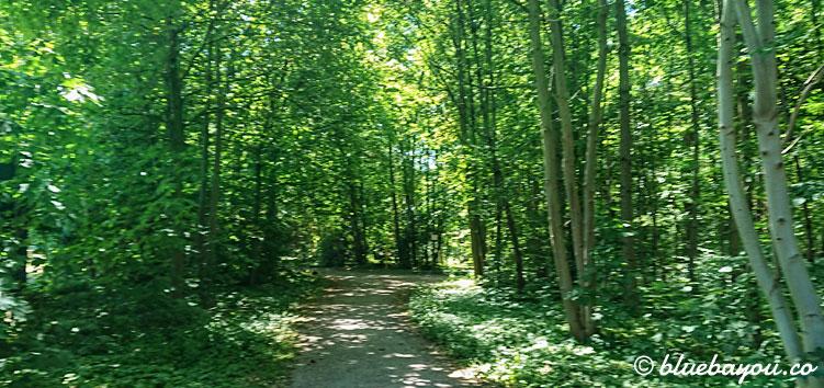 Dieses kleine Waldstück bietet mir ein wenig Abkühlung in der Megamarsch-Mittagshitze.