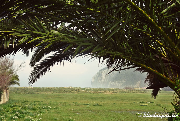 Blick auf die Felsen und das Meer unter einer Palme hindurch.