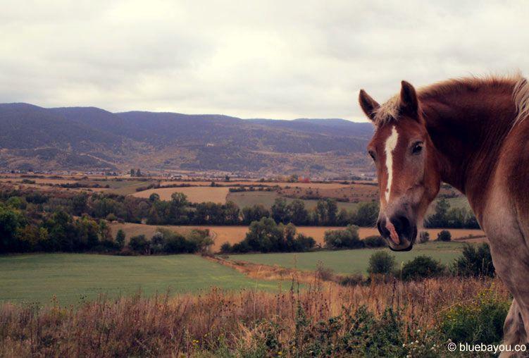 Kategorie Tierisch: Ein Pferd kurz vor dem französischen Bourg-Madame, unweit von Andorra.