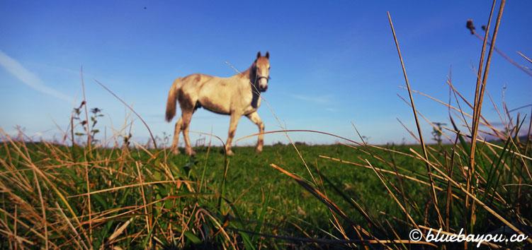 Ein Pferd auf dem Jakobsweg aus einer ungewohnten Perspektive.