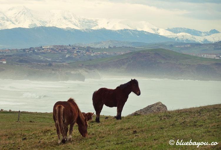 Pferde vor den schneebedeckten Bergen des Parque Nacional de los Picos de Europa.