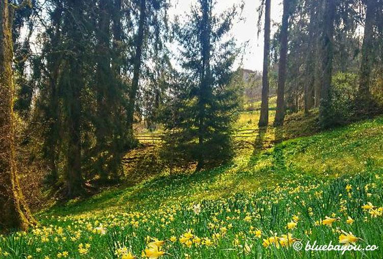 Roadtrip während Corona in den Schwarzwald ins schöne und leere Bad Wildbad.