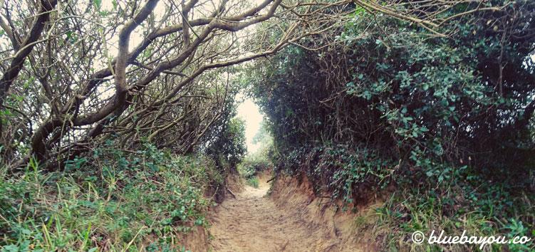 Sandiger Waldweg in Spanien entlang des Jakobswegs.