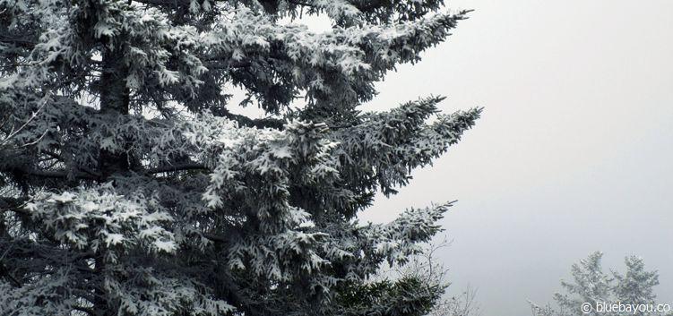 Verschneite Winterlandschaft im März in Tennessee.