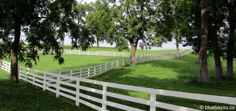 Pferdekoppeln mit weißen Zäunen in Lexington, Kentucky.