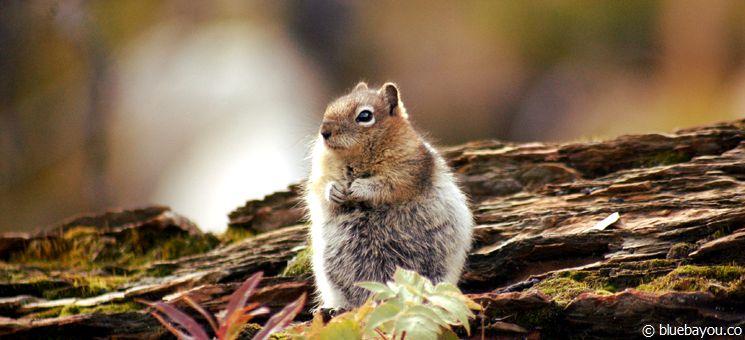 Wildlife wird am ehesten von Natur- und Outdoor-Reisenden gesehen.